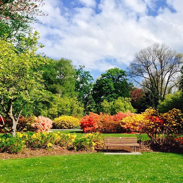 plantas jardim mediterraneojardim com flores multicoloridas do