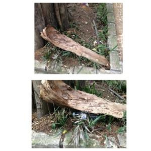 Aproveite os recursos da rua. Cascas, pedras e folhas são uma ótima cobertura natural.